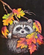 Raccoon and Fall Leaves